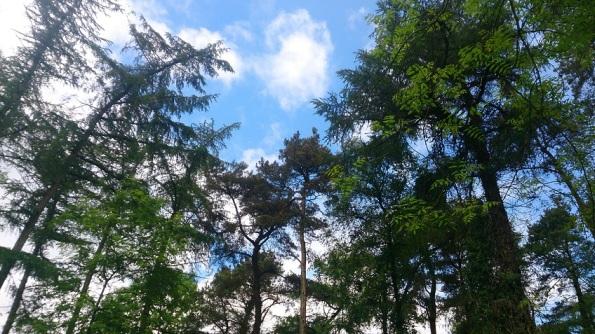tree-sky-woods