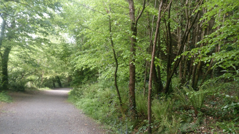 irish-woods