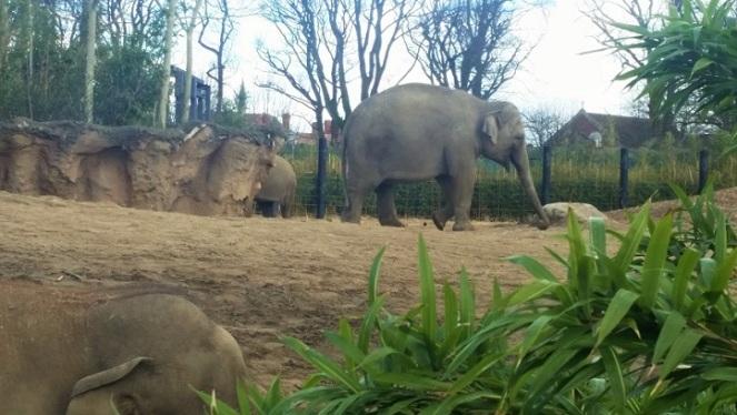 dubzoo-elephant