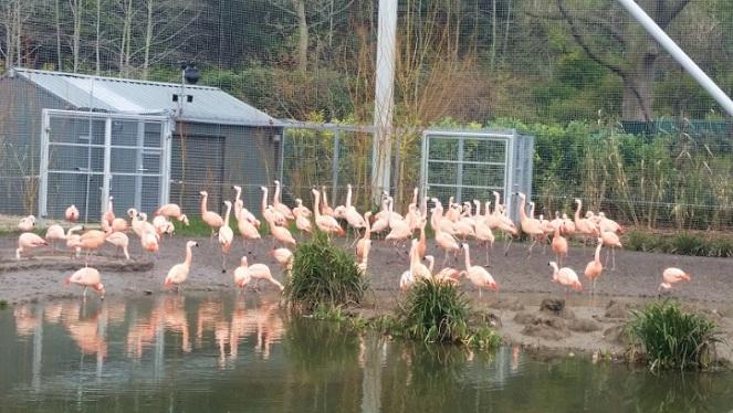 dubzoo-flamingos